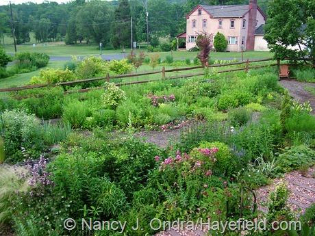 Side garden at Hayefield June 2012