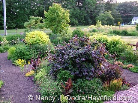 The Front Garden at Hayefield (Summer 2012)