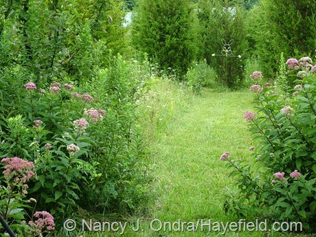 Meadow path at Hayefield