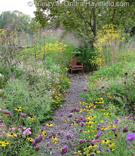 Side garden path at Hayefield