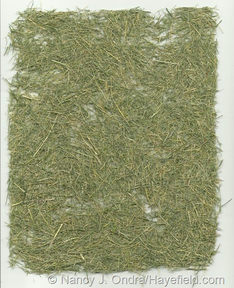 """Paper"" made from Stipa tenuissima foliage (no pulp)"