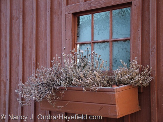 Windowbox at Hayefield