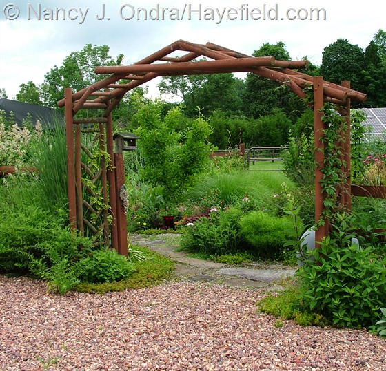 Courtyard arbor at Hayefield.com