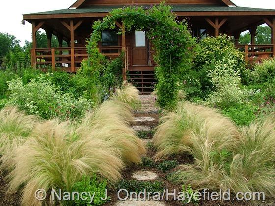 Side Garden: July 2, 2013 at Hayefield.com