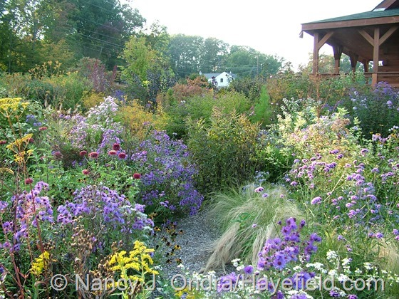 Side Garden: October 1, 2013 at Hayefield.com
