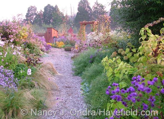 Side Garden: October 3, 2013 at Hayefield.com