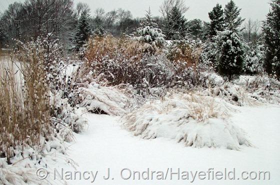 The Arc Borders: December 10, 2013 at Hayefield.com