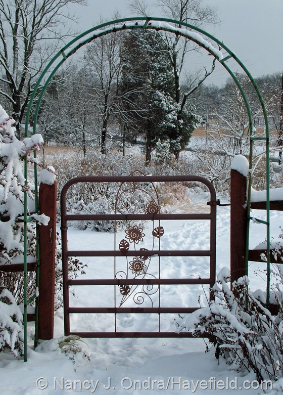 Side garden gate at Hayefield.com