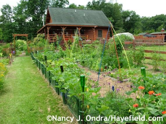 The veg garden at Hayefield.com