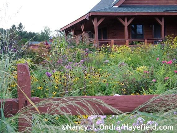 Side garden at Hayefield.com