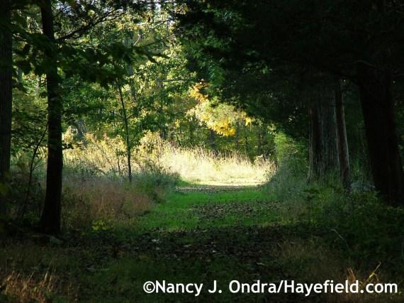 Path at the farm - Hayefield.com