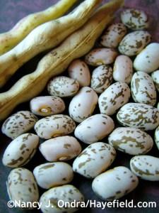 Pinto bean seeds at Hayefield.com
