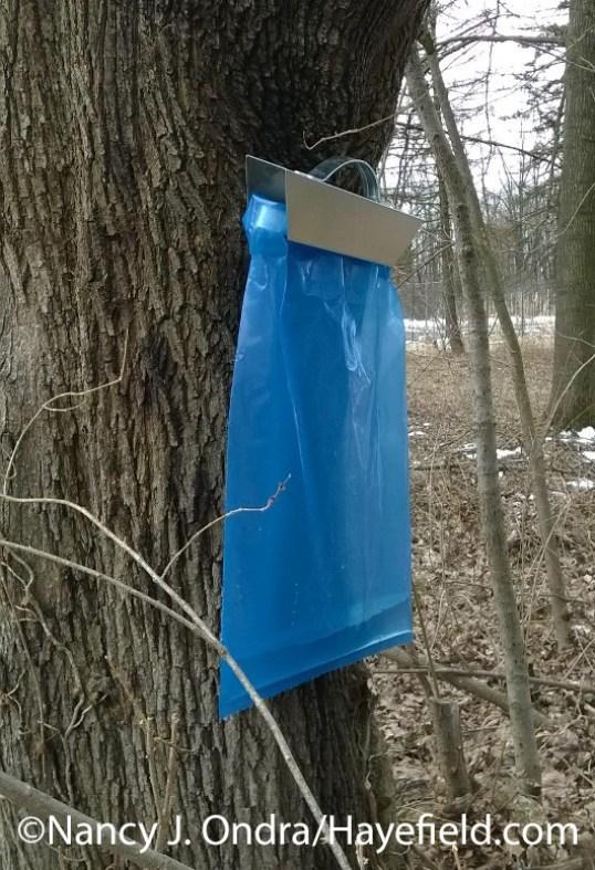 Maple Sugaring Sap Bag