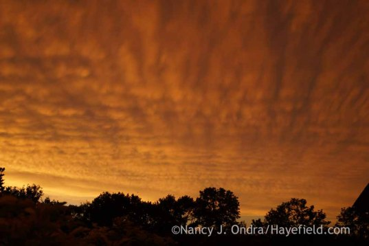 Mammatus Clouds - June 23, 2015; Nancy J. Ondra at Hayefield