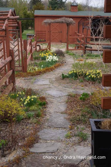 Courtyard Path from house April 2015; Nancy J. Ondra at Hayefield