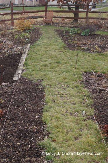 Diagonal Path December 2015; Nancy J. Ondra at Hayefield