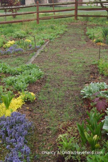 Diagonal Path May 2015; Nancy J. Ondra at Hayefield