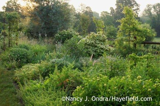 The Side Garden in early July [Nancy J. Ondra at Hayefield]