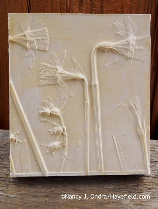Daffodil (Narcissus), Siberian squill (Scilla siberica), and reticulated iris (Iris reticulata) botanical casting [Nancy J. Ondra at Hayefield]
