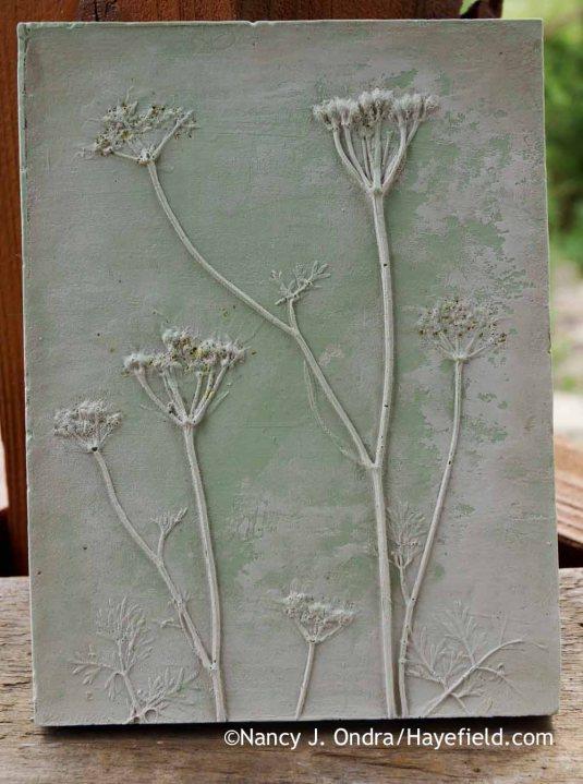 White lace flower (Orlaya grandiflora) [Nancy J. Ondra at Hayefield]