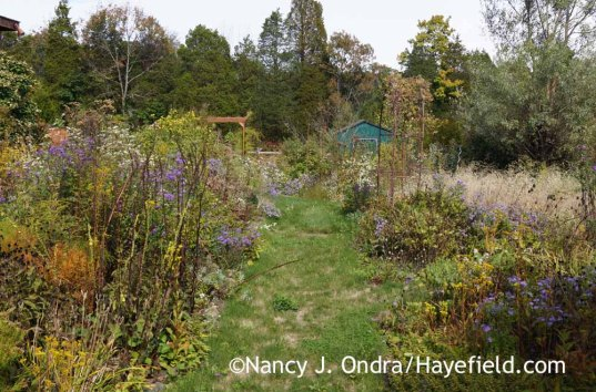 The Side Garden at Hayefield - October 9, 2016; Nancy J. Ondra
