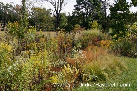 Perennials in The Shrubbery at Hayefield [Nancy J. Ondra at Hayefield]