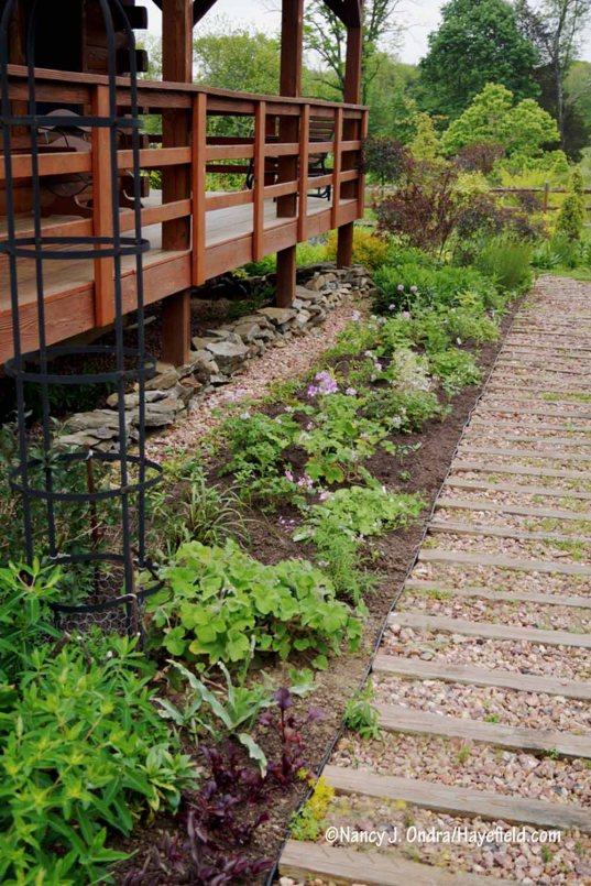 Scented geranium border, newly planted [Nancy J. Ondra/Hayefield.com]