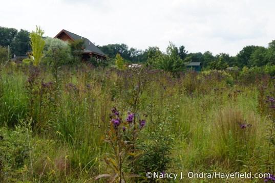 The Lower Meadow at Hayefield - August 2017 [Nancy J. Ondra/Hayefield.com]