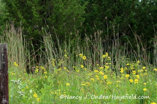 ©Nancy J. Ondra/Hayefield.com