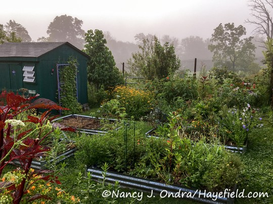 """Hayefield """"seed farm"""" [Nancy J. Ondra/Hayefield.com]"""
