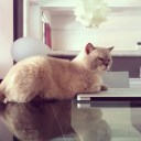 hayinstyle-cat-fat-boy-slim