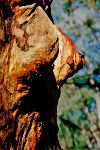 Woman Tree WM