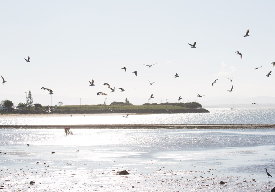 Birds at Scarborough Point