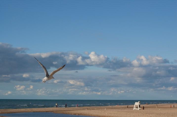 Seagull stock image