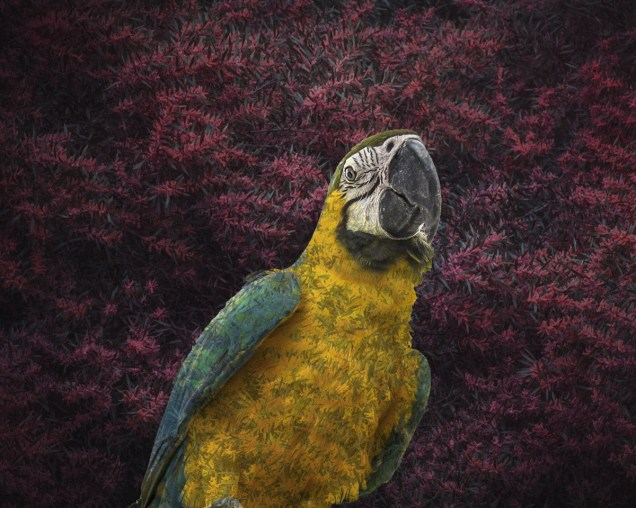 Macaw by Hayley Roberts