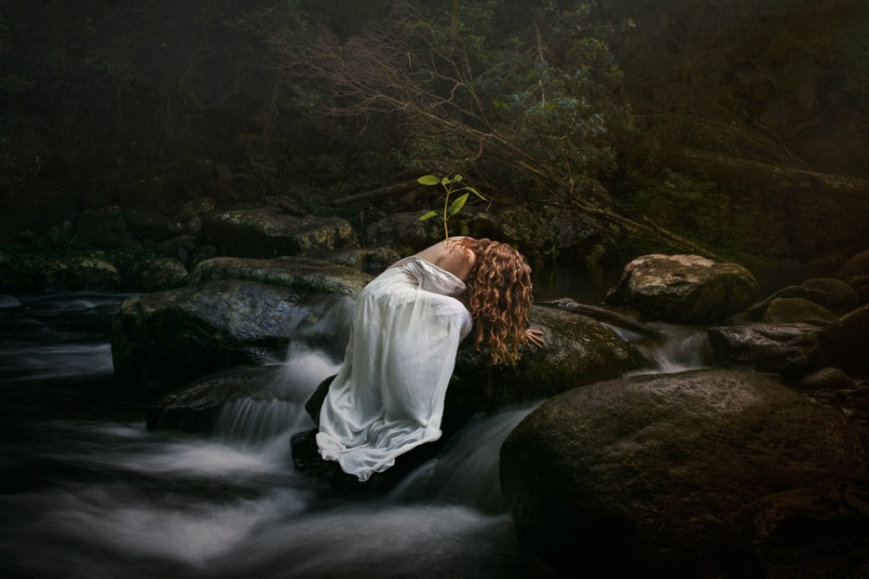 forest bathing, shinrin yoku, forest, rainforest, woods, plant, grow, earth day, o'reilly's, lamington national park, waterfall, river, ecotherapy, nature therapy, nature, healing