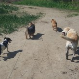Group walk 2