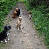 Group walk 3
