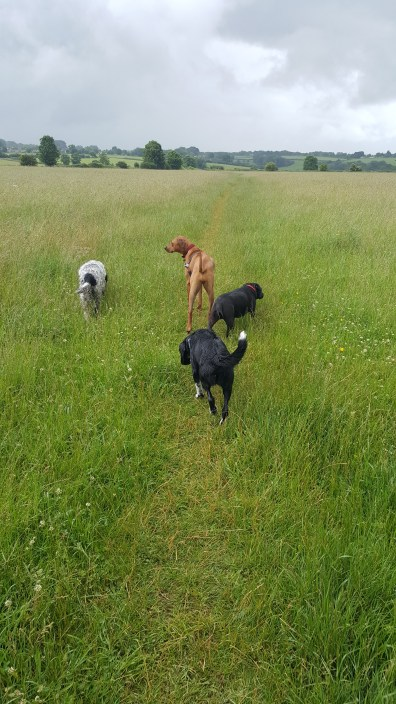 Storm, Honey, Twirl and Tuka (2)