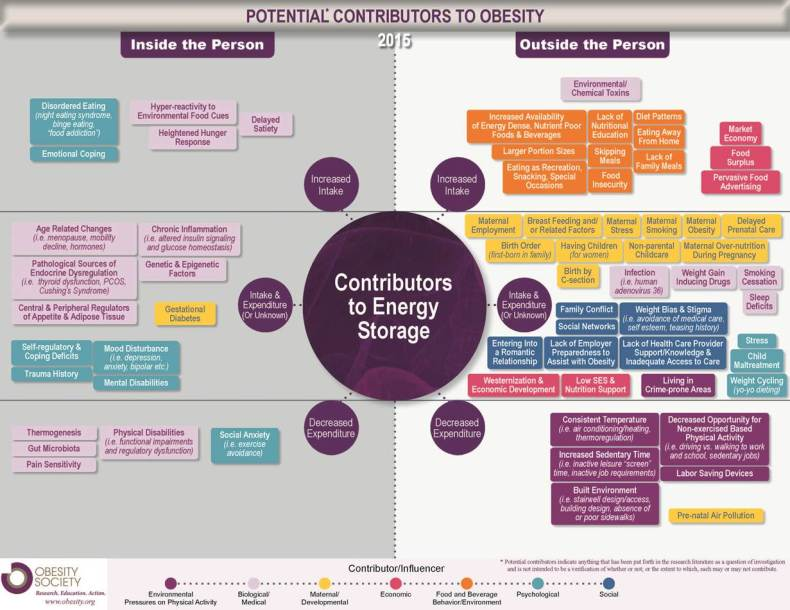 potential_contributors_to_obesity_2015_infographic infografia obesidad