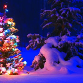 Best Holiday Lights Displays in and around Chicago