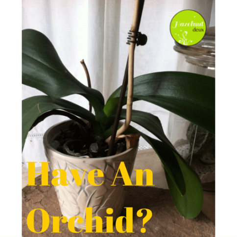 Have an orchid-