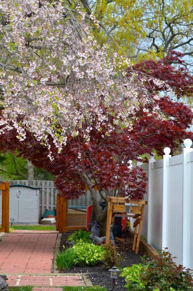 My Garden May 2014 - 20