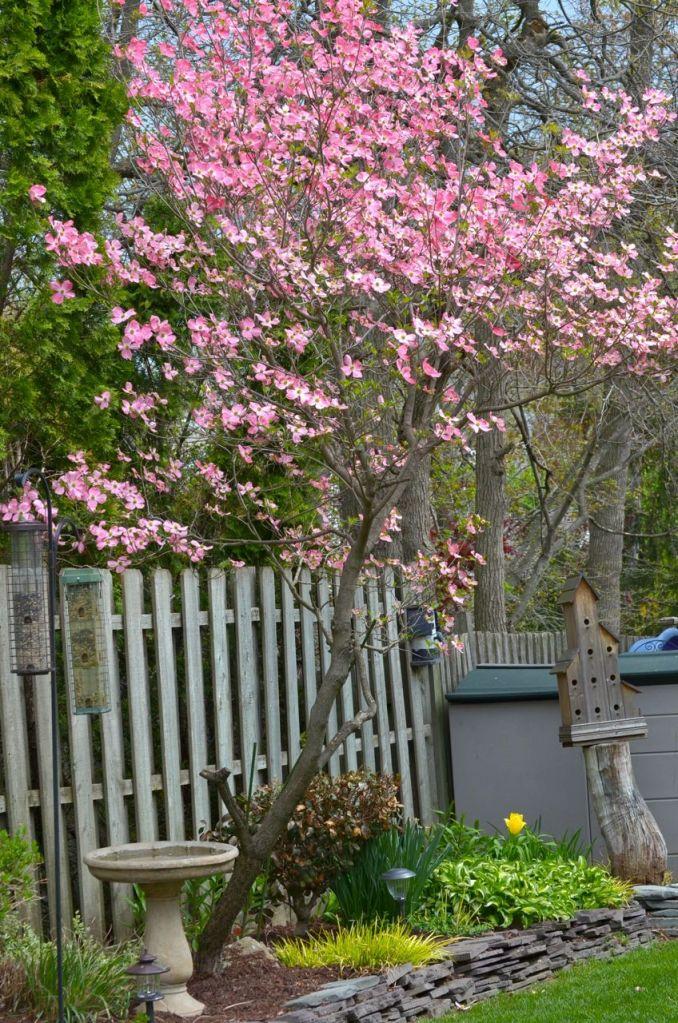 My Garden May 2014 - 36