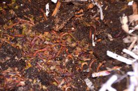 Composting-2014 - 10