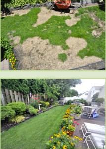 My_Lawn_-_Back