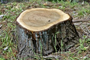 tree stump2