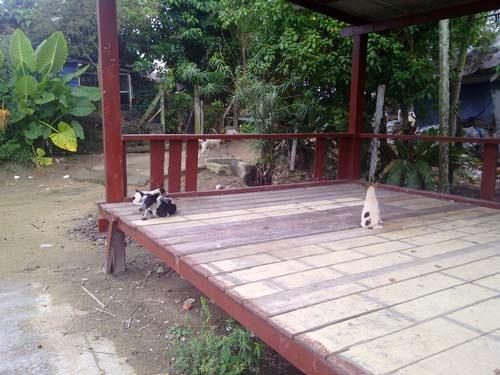 GUP Bukit Payung (2)