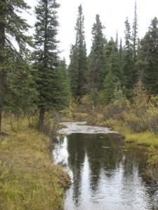 Stream behind the Teklanika Campground