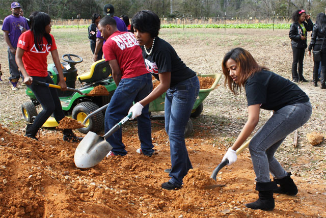 Black greek fraternities and sororities participate in a MLK National Day of Service community project at the University of Southern Mississippi Campus.